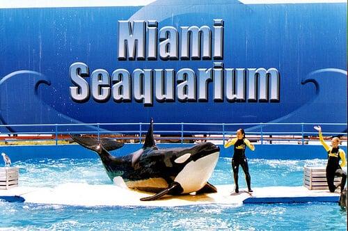 Aquário Seaquarium em Miami