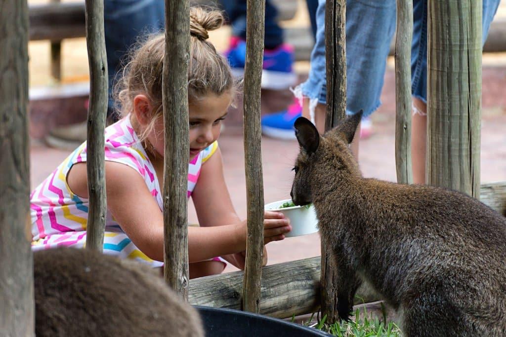Interação com animais no Busch Gardens