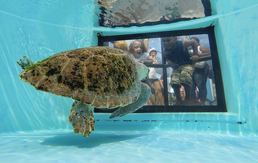 Loggerhead Marine Life Center em Palm Beach