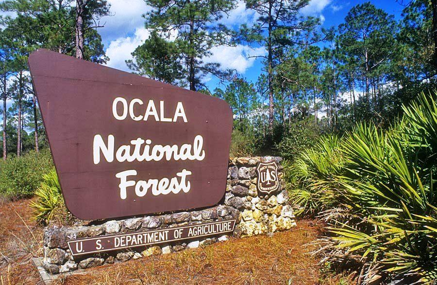 Ocala National Florest na Flórida