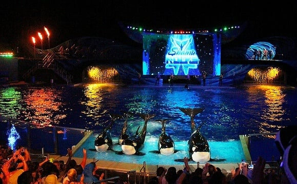 Atrações das Summer Nights no Sea World