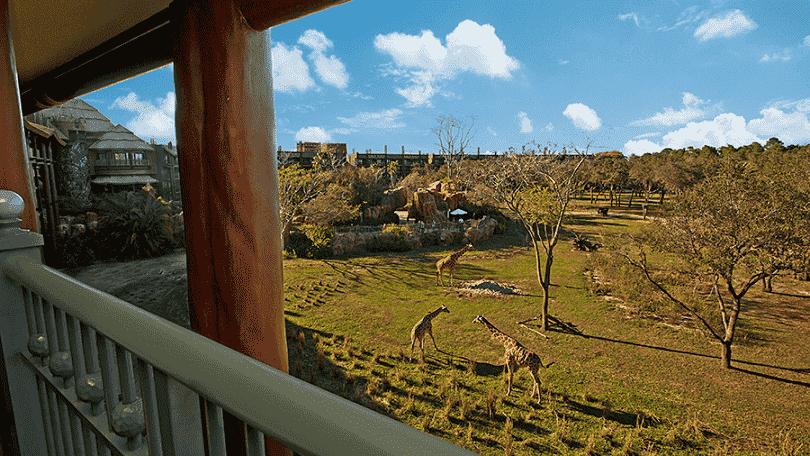 Informações do Disney'a Animal Kingdom Lodge em Orlando