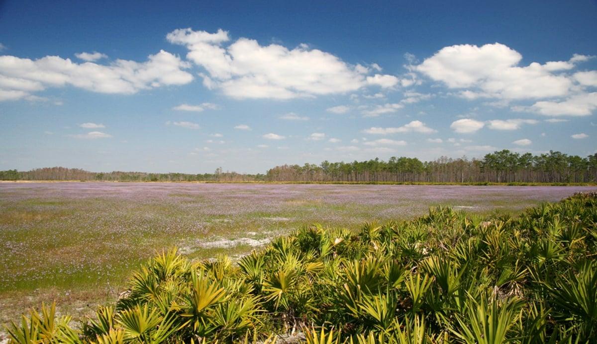 Disney Wilderness Preserve em Orlando