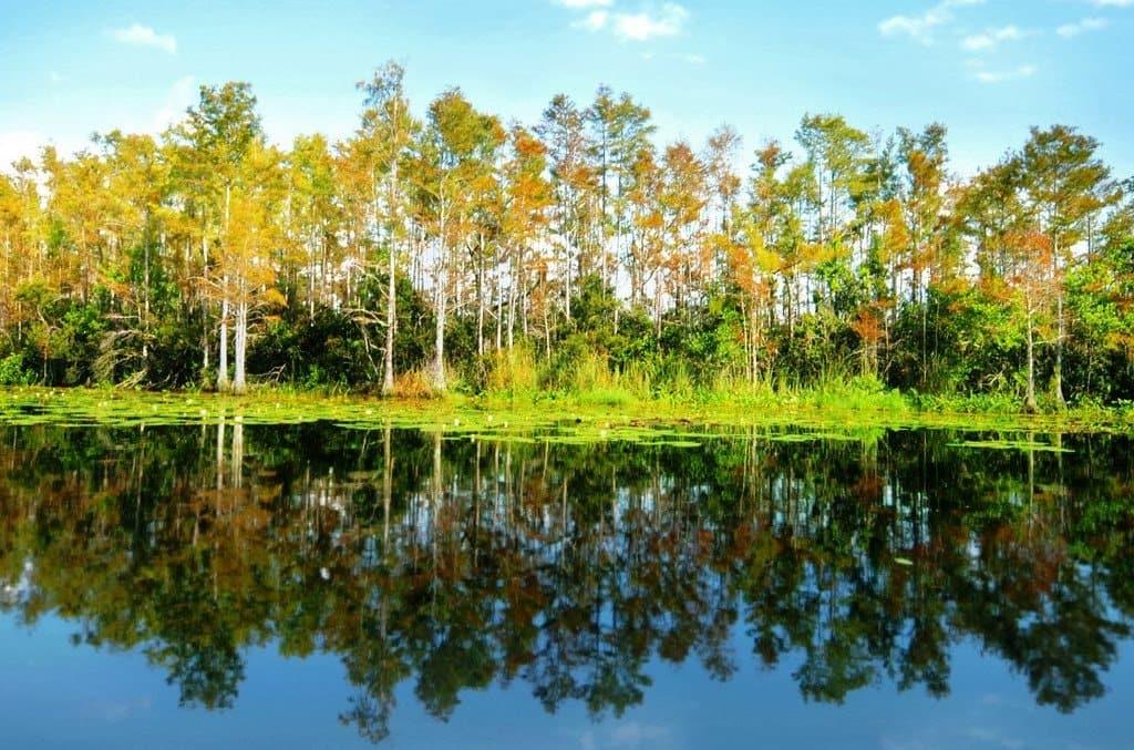 Disney Wilderness Preserve Orlando