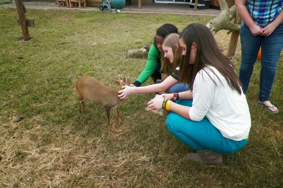 Exotic Animal Experience em Orlando