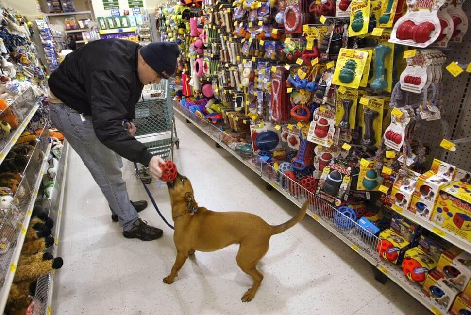 Pet Shop Pet Smart em Miami e Orlando