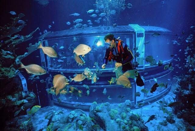 Mergulhador no Epcot DiveQuest na Disney em Orlando