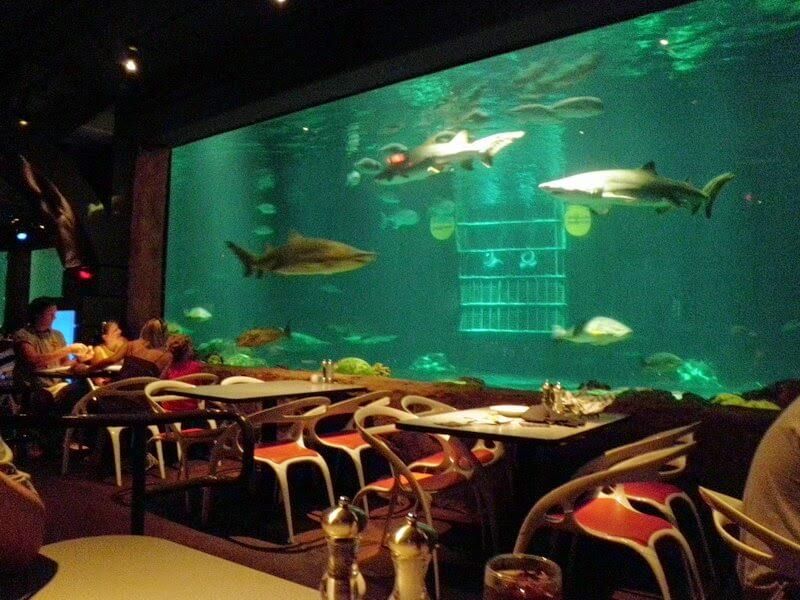 Restaurante Sharks Underwater Grill do SeaWorld em Orlando