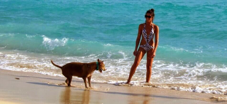 Praia Key Biscayne em Miami aceita cachorros