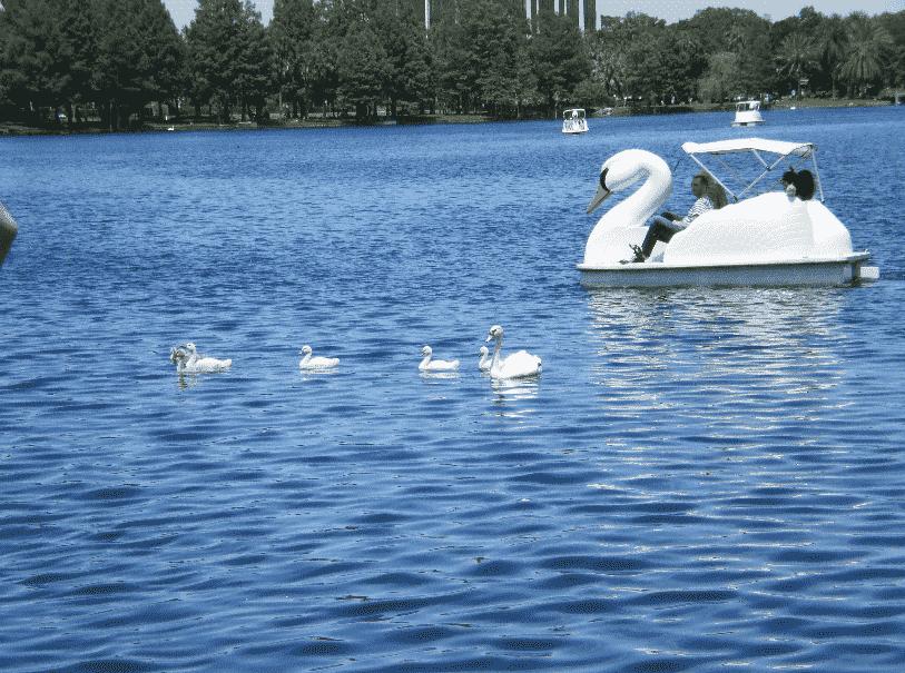Pedalinhos no Lake Eola em Orlando
