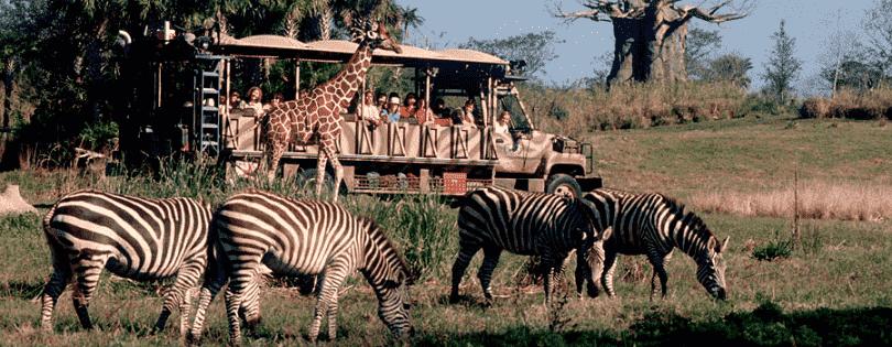10 destaques do Animal Kingdom em Orlando