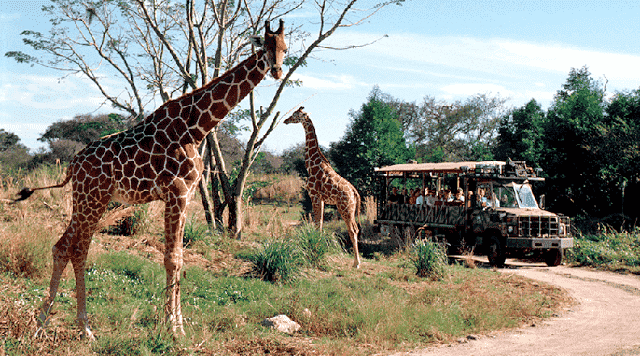 Kilimanjaro Safaris no Animal Kingdom em Orlando