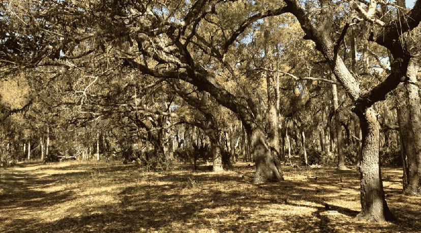 Lake Kissimmee State Park em Orlando
