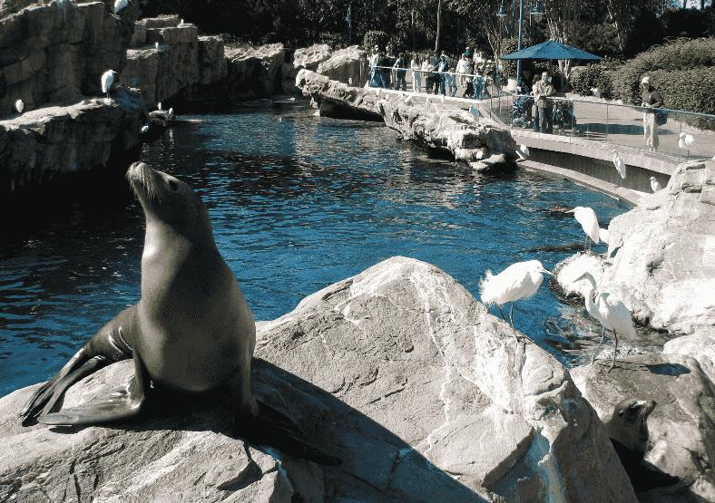 10 destaques do parque Sea World em Orlando