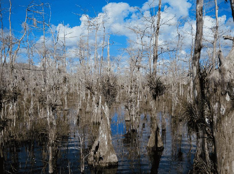 Big Cypress Swamp em Everglades em Miami