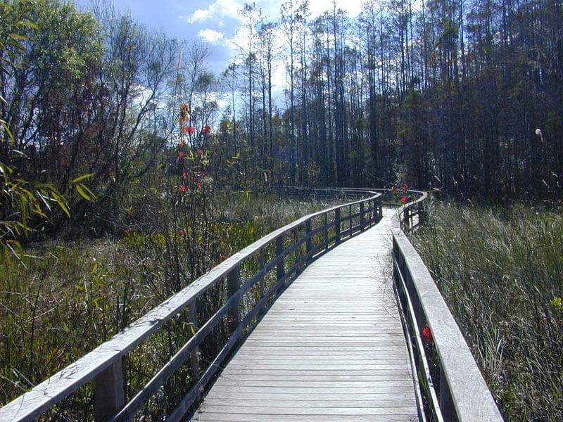 Corkscrew Swamp em Everglades em Miami