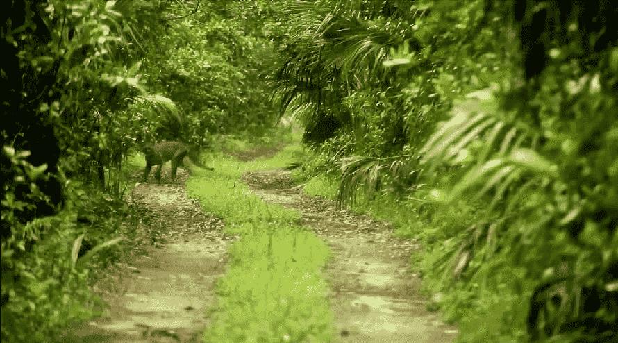 Fakahatchee em Everglades em Miami
