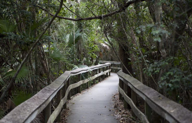 Mahogany Hammock em Everglades em Miami