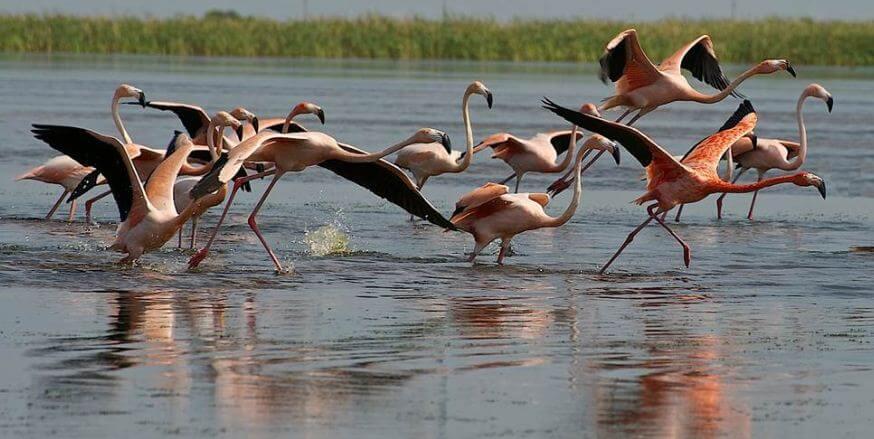 Flamingo em Everglades em Miami