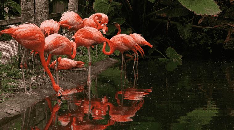 Flamingo Gardens em Miami