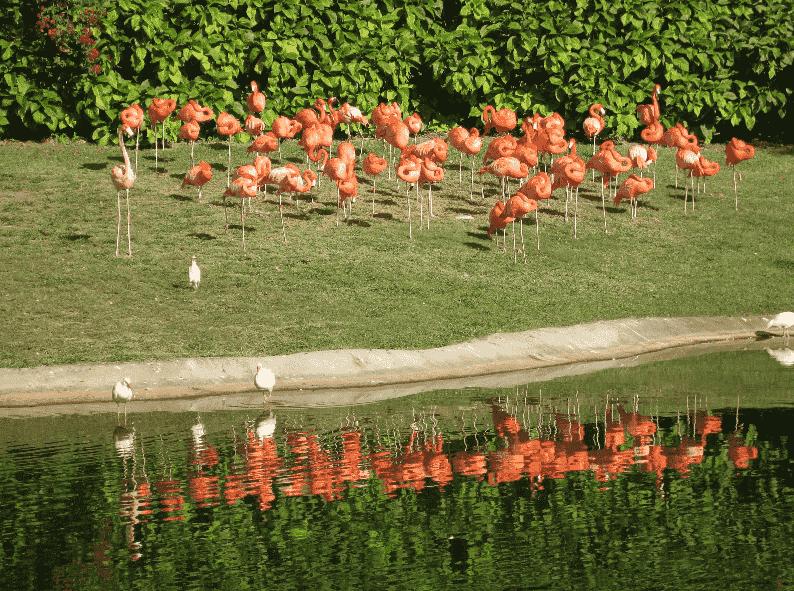 Jungle Island en Miami