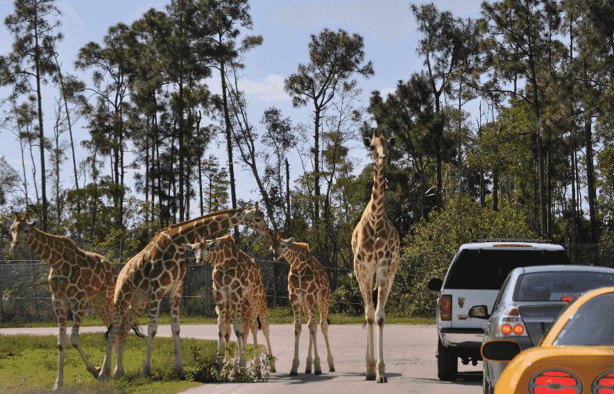 Loin Country Safari em Miami