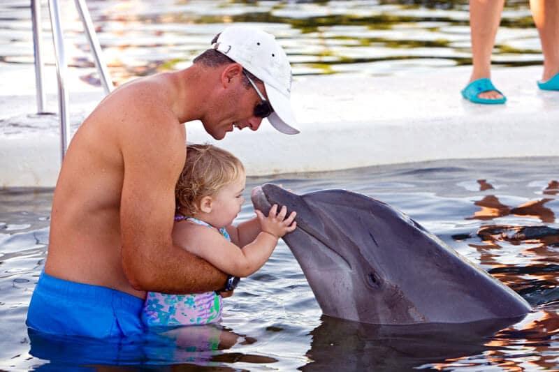 Dolphin Research Center nas ilhas Keys em Miami