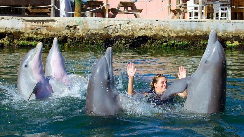 Dolphin Cove nas ilhas Keys