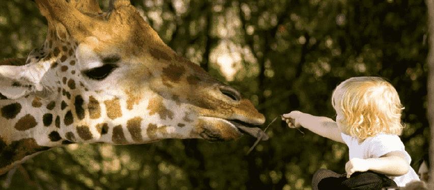 Naples Zoo na Flórida