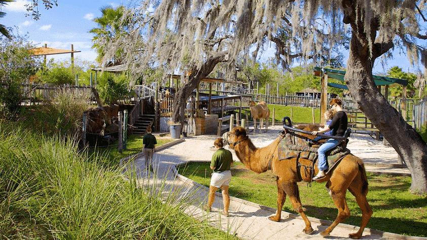 Lowry Park Zoo em Tampa