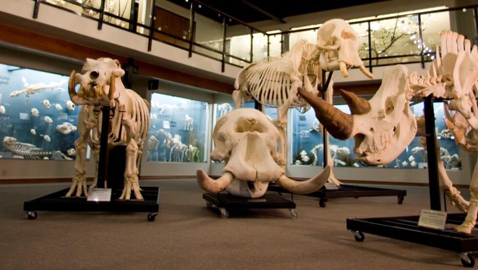 Museu de esqueletos Skeletons em Orlando