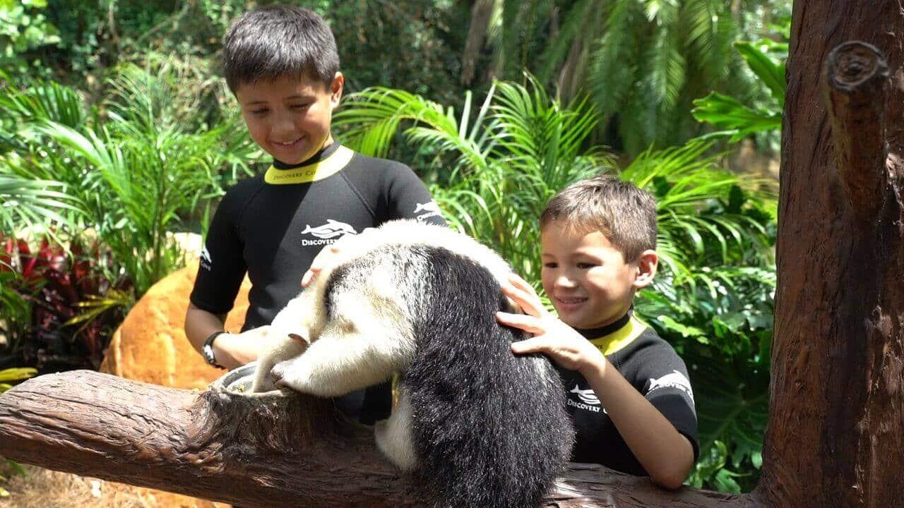 Massagem e encontro com animais no Discovery Cove