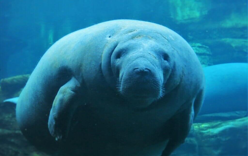 Quais animais você encontra no SeaWorld em Orlando: Animal na piscina do SeaWorld