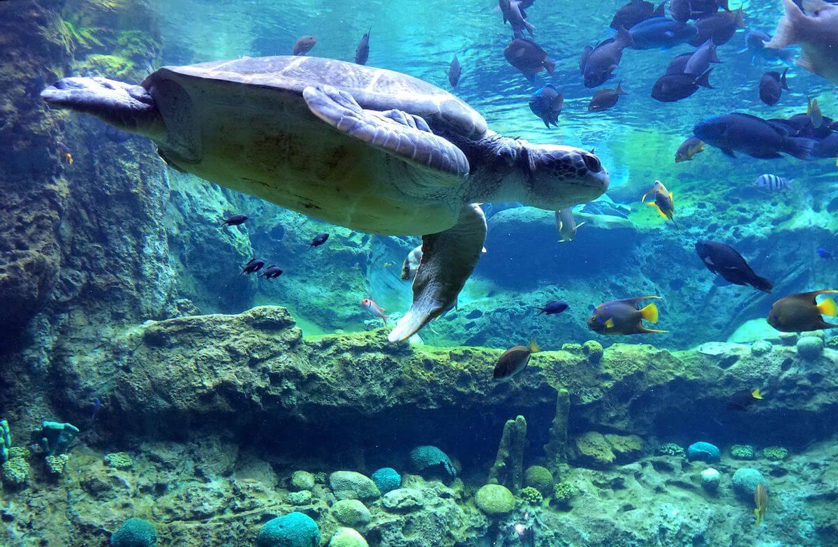 Quais animais você encontra no SeaWorld em Orlando
