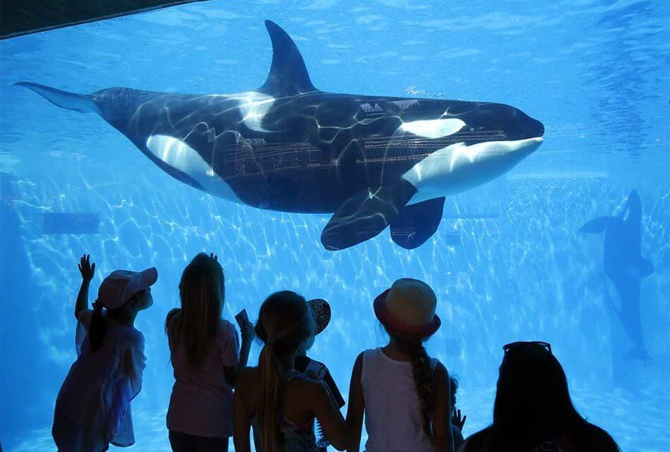 Ingressos e combos do Parque SeaWorld Orlando