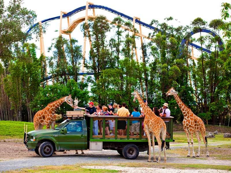 Safári no parque Busch Gardens Tampa Bay