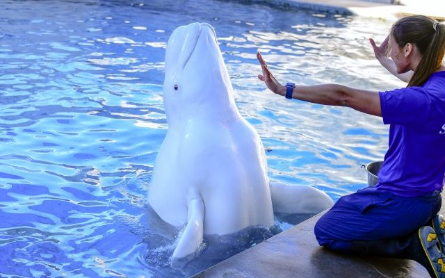 Tours nos bastidores do SeaWorld Orlando