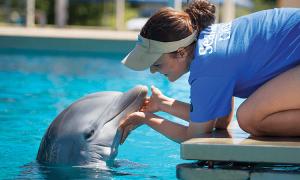 Golfinho com treinadora nos bastidores do SeaWorld Orlando