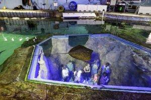 Aquário nos bastidores do SeaWorld Orlando