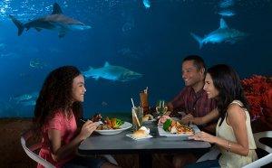 Prato saudável no SeaWorld