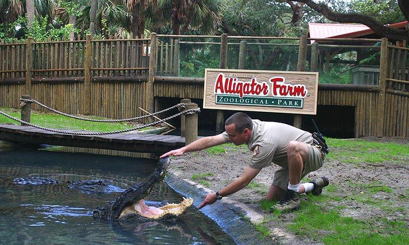 Alligator Farm em Saint Augustine